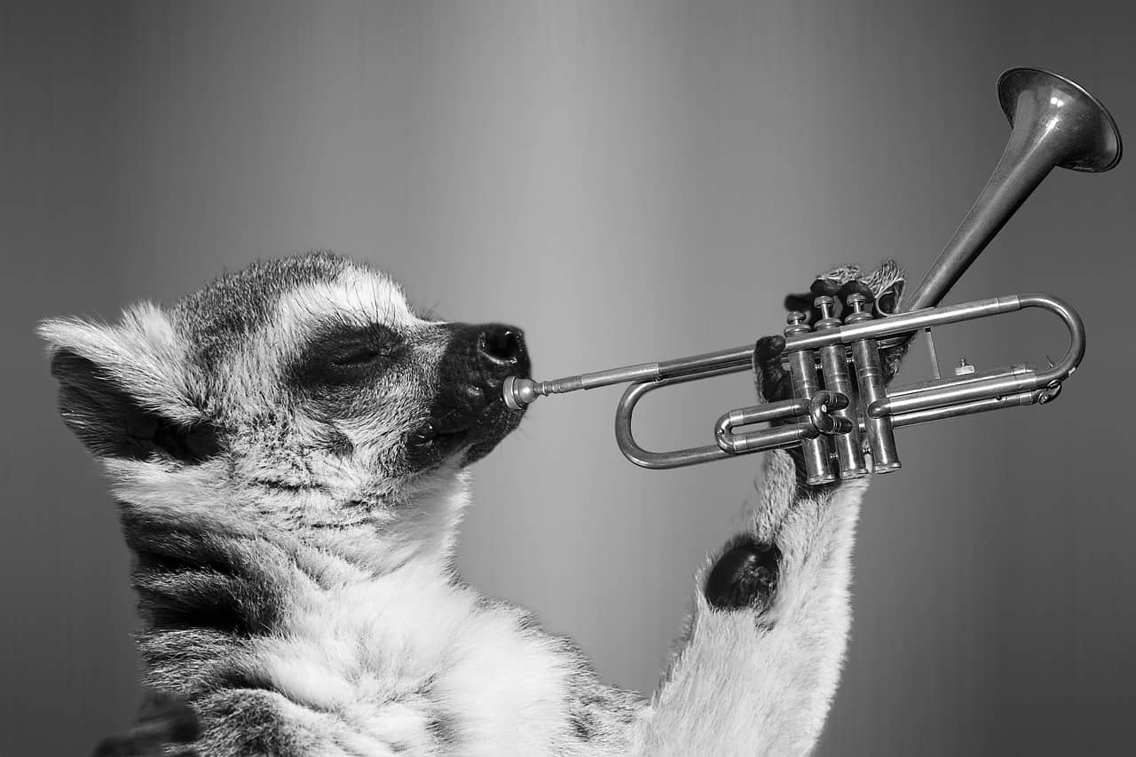 funny trumpet image